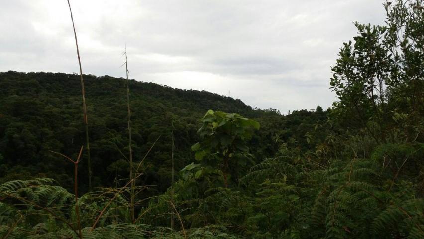 S?TIO-RURAL-VIDAL RAMOS - SC-BAIXO RIO DAS PACAS